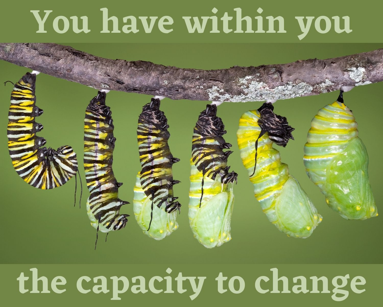 You have within you the capacity to change - text with image of monarch caterpillar creating its cocoon